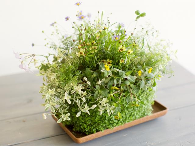 岡山 フラワー 寄せ植え ギャザリング Biflam ~ビフラム~美しい花の群れ:三ッ星レッスン 岡山